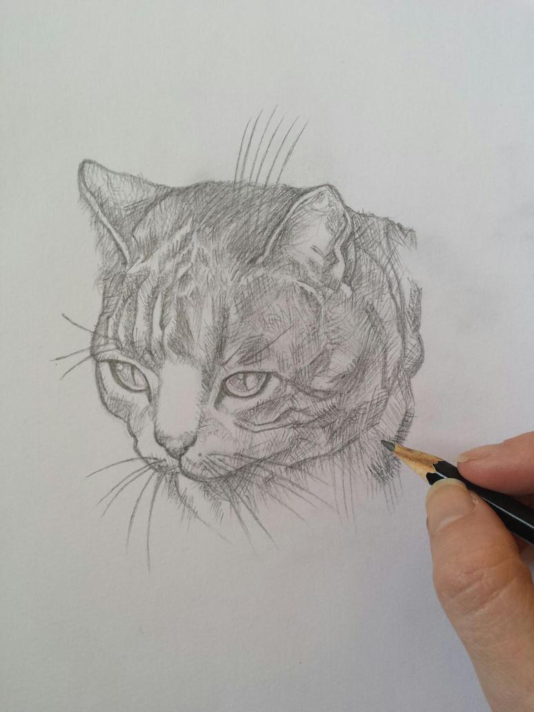Cat (pencil) by AlexandraDart