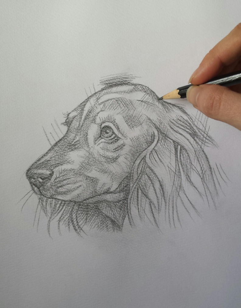 Dog (pencil) by AlexandraDart