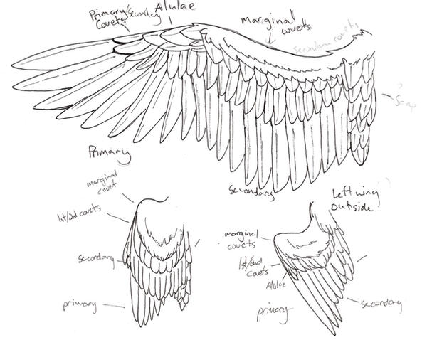 how to draw owl wings