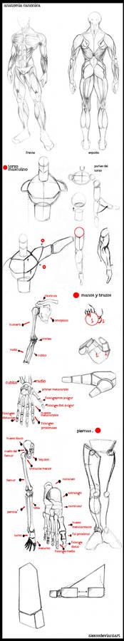 PG HALF T 2  comic y anatomia