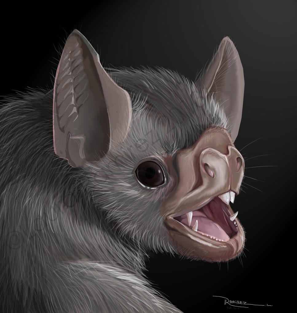 Vampire Bat by LauraRamirez on DeviantArt