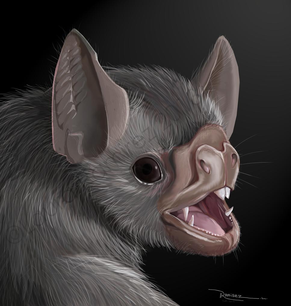 Vampire Bat by LauraRamirez on DeviantArt