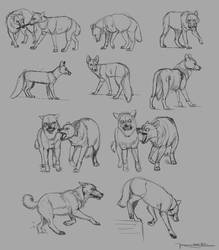 Drawing Exercies 02 - Wolves / Foxes