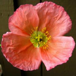 A single flower by Earthmagic
