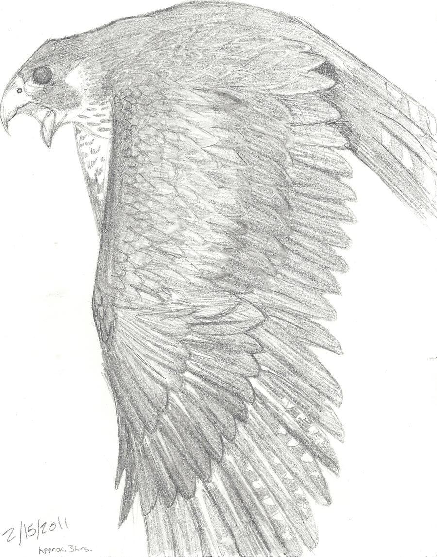 Peregrine Falcon by mikiayla97