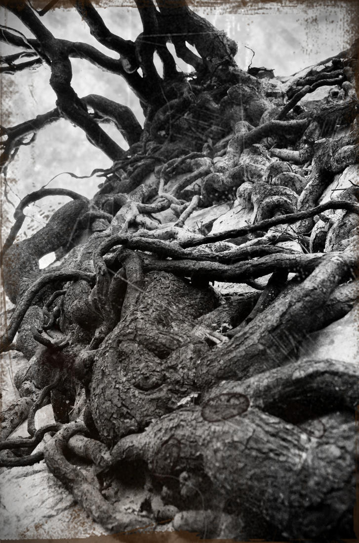 the roots by bubastis2