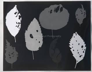 Leaf Photogram by TheGreenFairy