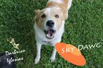 Sky Dawg