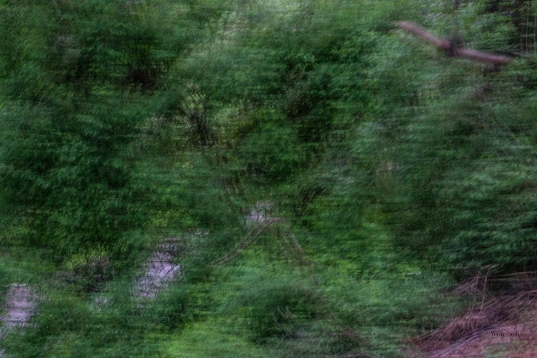 Hillside by stingwray