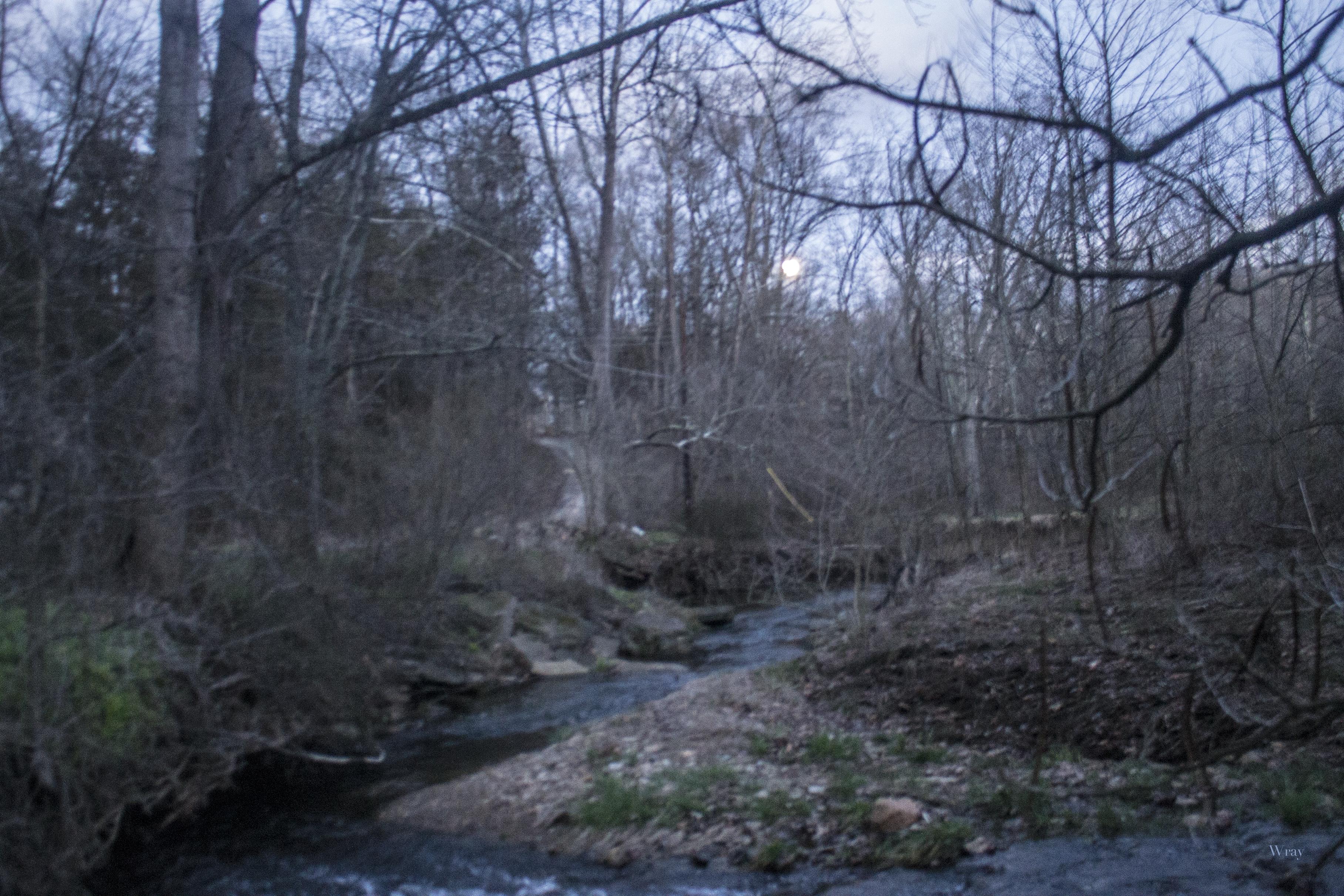 Wild Creekside