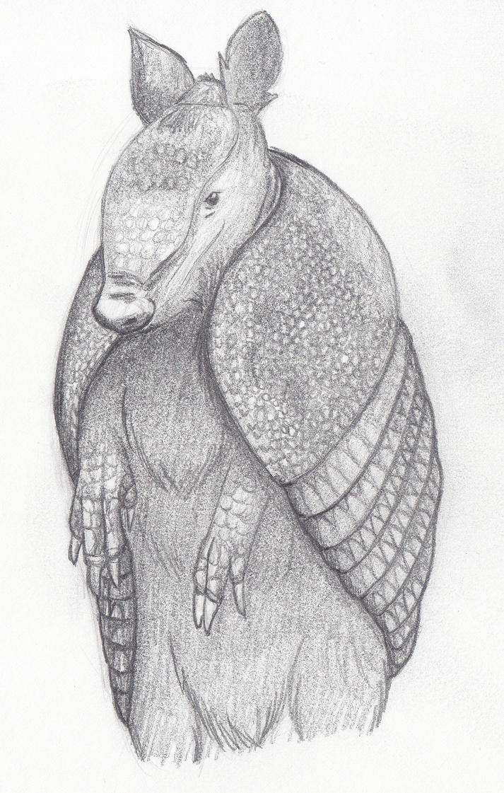 Animal Creature  Study 2 - Armadillo by wetsquirrel
