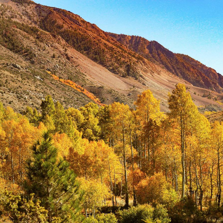 Autumn Forest Overlook