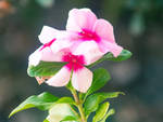 Macro Garden Flower
