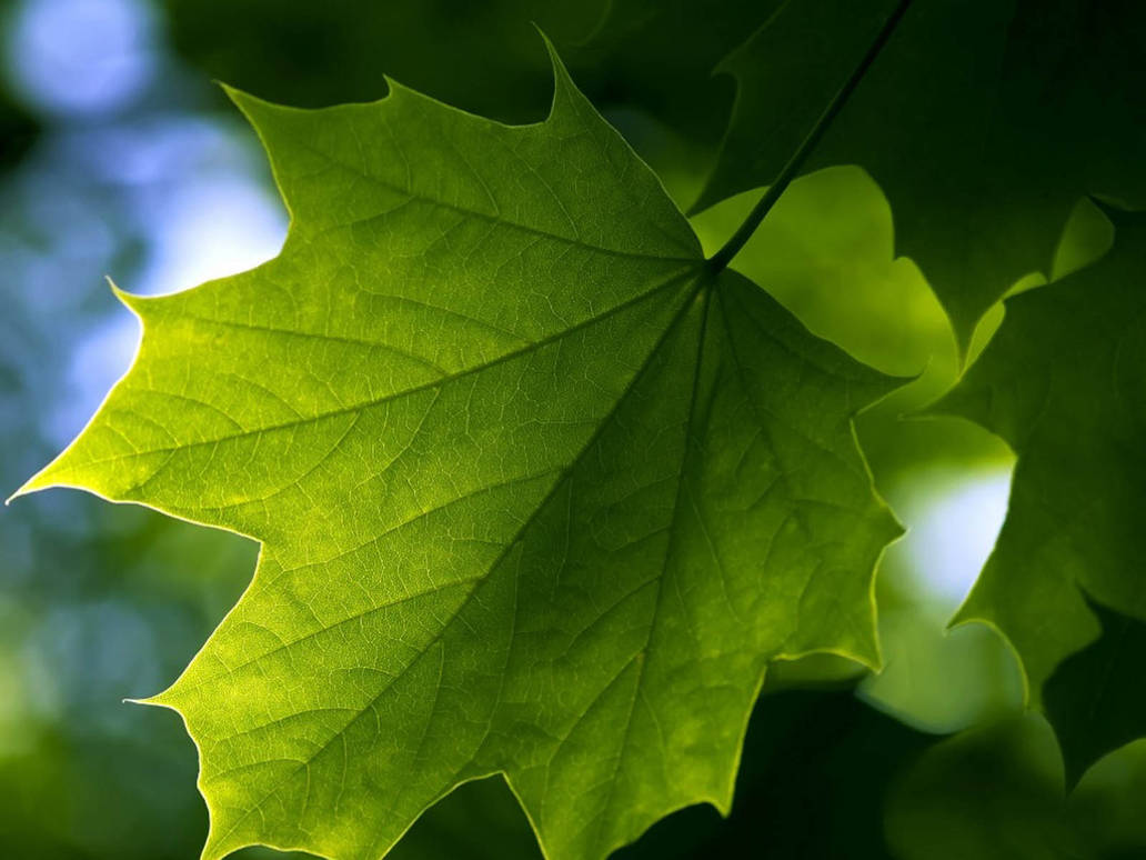 Green Leaf Wallpapers 4