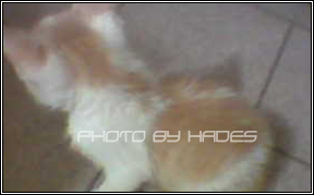 Tommy My Cat 002 by HadesDiosSupremo