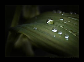 After the Rain... by Taragon
