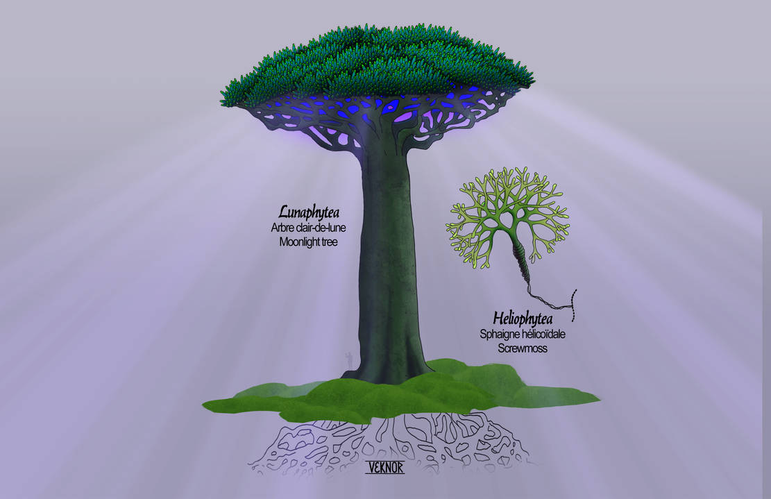 Lunaphytea / Heliophytea