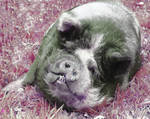Pig in pink grass by Itsadequate