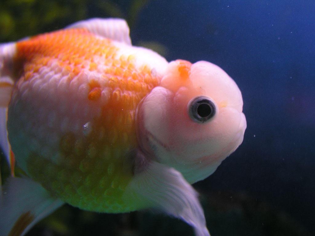 fish brain - photo #38