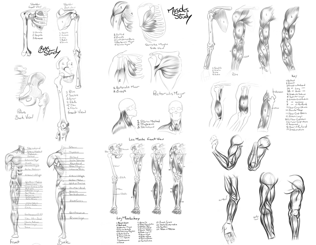 Anatomy Reference by Khem-Art on DeviantArt