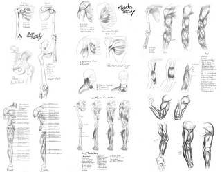 Anatomy Reference by Khem-Art