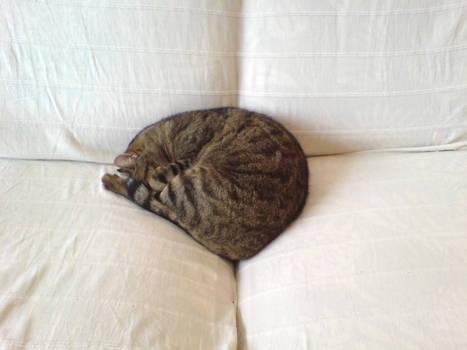 wax endormi