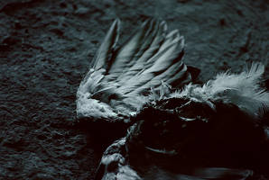 not a swan by ciskacza