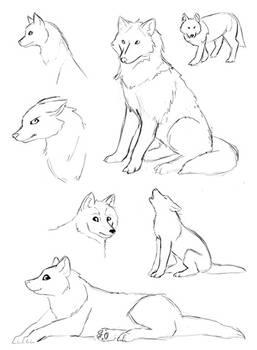 A Few Wolf Sketches
