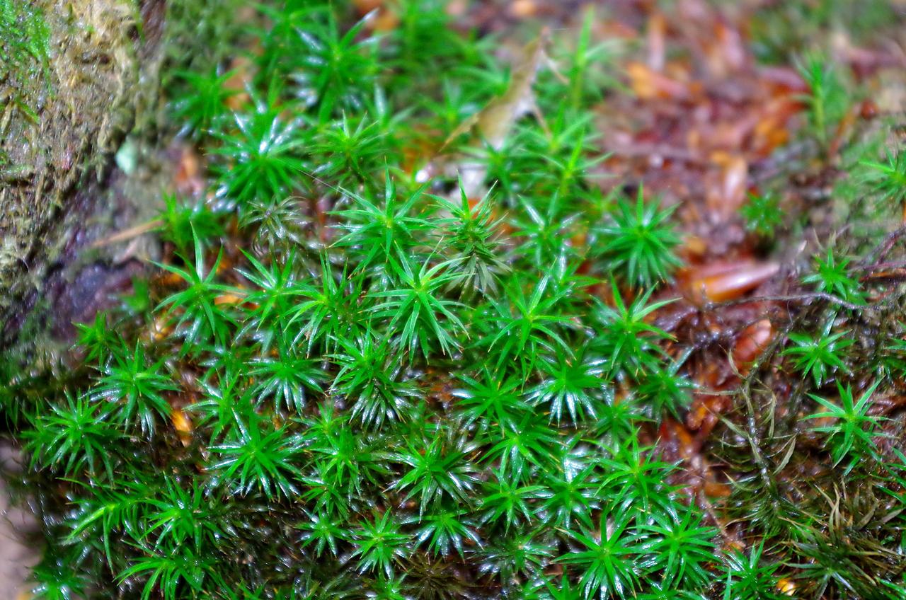 Little green stars by irrlicht71