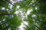 Forest life by irrlicht71