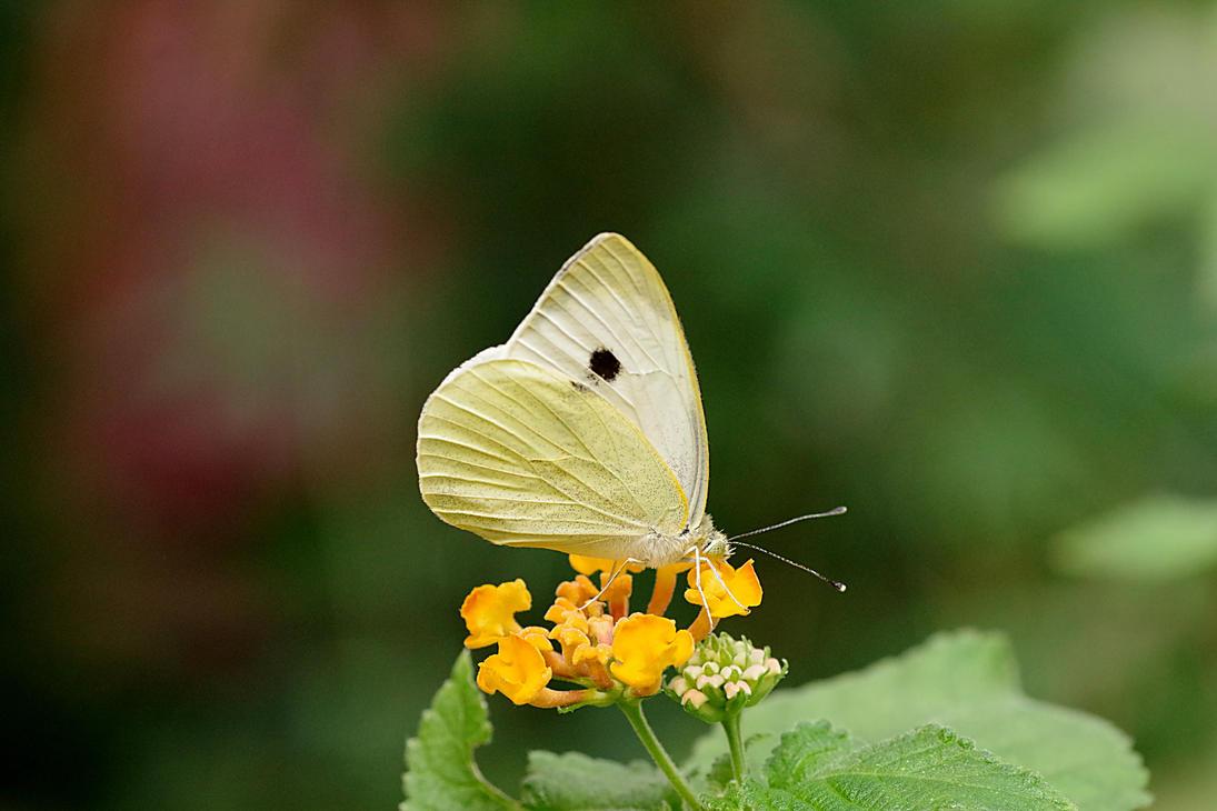 Little white friend by irrlicht71