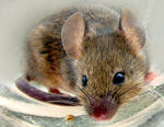 mouse snack