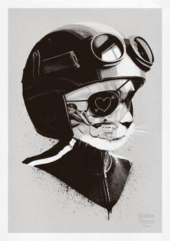 Cat-Racer