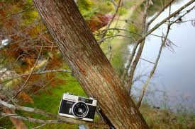 Camera In Tree by godzillarules10