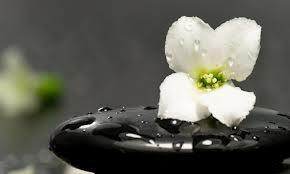 Flower On Rock by godzillarules10