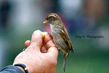 BIRDY. by Zena-N