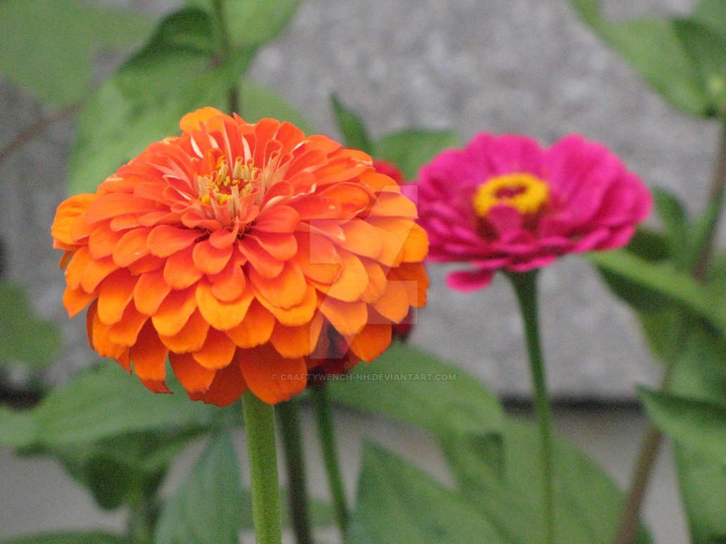 Pretty Flowers by craftywench-nh