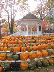 Rows of Pumpkins