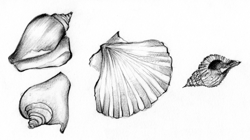how to draw seashells on a beach