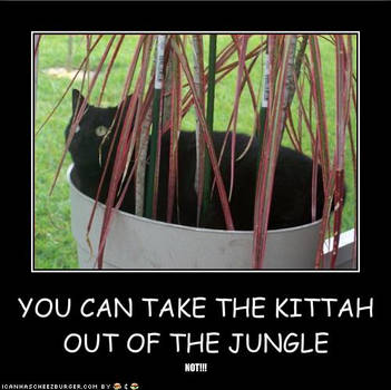 the kittah's jungle by darquewanderer