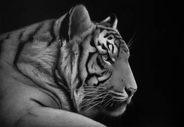 2010 'Tiger'' - pencil on paper by pratstattoo