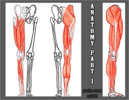 AnatomyP1