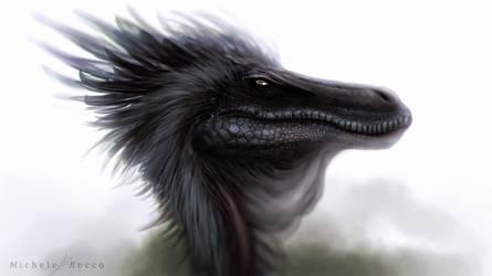 Black Tuft