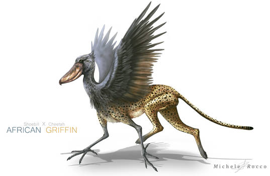African Griffin