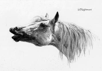 A Horse..smile by Nightmare-v