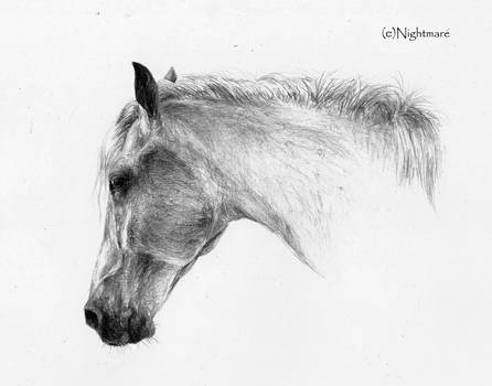 White horse by Nightmare-v