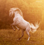 Andalusian stallion Bucefalo XXXII