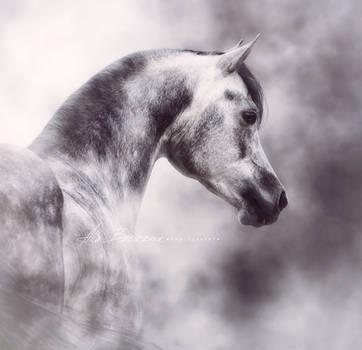 Persepolis, Arabian horse by Nightmare-v