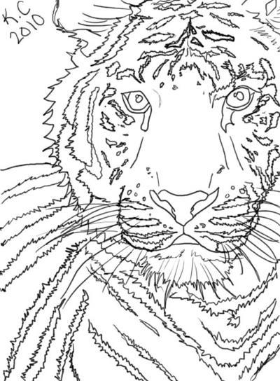 Line Drawing Tiger : White tiger line art by sho on deviantart