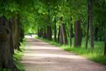 lime walkway